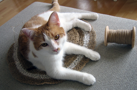 Paper Twine: A cat-friendly material to work with 