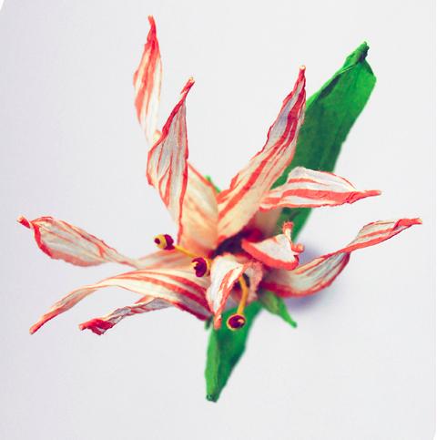 PaperPhine: Paper Flower - paper twine flower